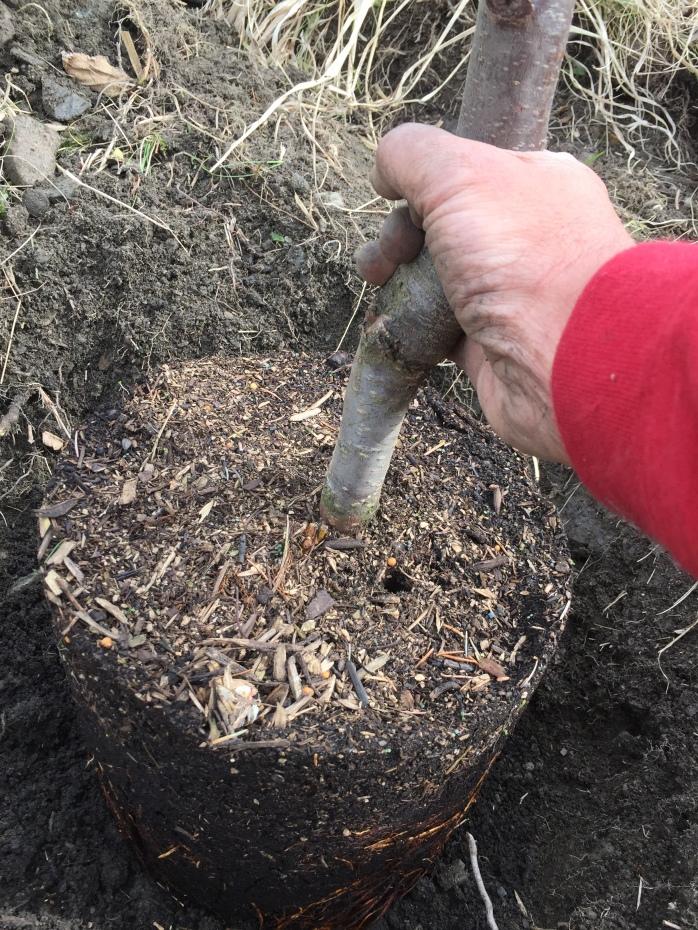 Bäumchen pflanzen