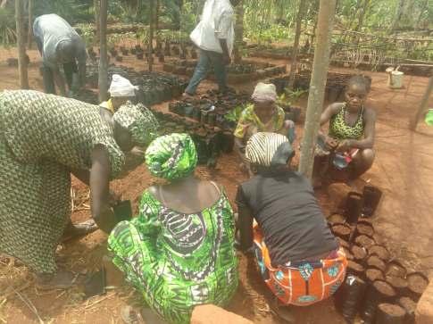 selber junge Fruchbäume ziehen in der eigenen Baumschule