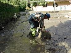 Rettung der Schafe