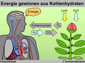Koexistenz von Mensch und Pflanzen
