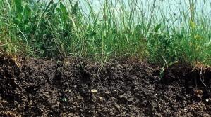Erhaltung der Bodenfruchtbarkeit