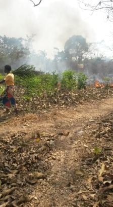 Mit Palmwedeln wehrt man dem Feuer